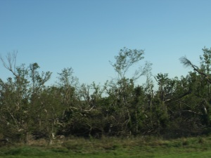 Some trees that were knocked down by the tornadoes in Oklahoma.