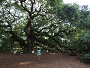 "Outside of downtown Charleston is a tree called ""Angel Oak"". Nobody knows how old it is exactly. When I was a kid we could climb on it, now it is being supported and your not allowed on it."
