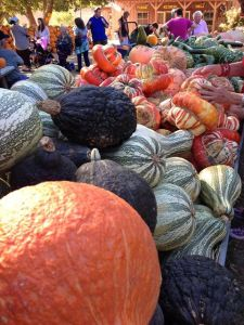 Beautiful pumpkins!