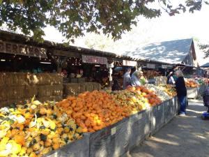 Squash and pumpkins at Avila Barns