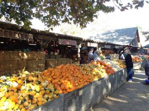 Squash and pumpkins at Avila Barns