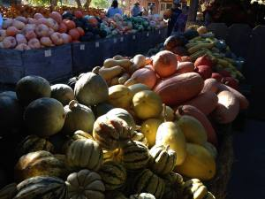 Pumpkins at Avila Barns.